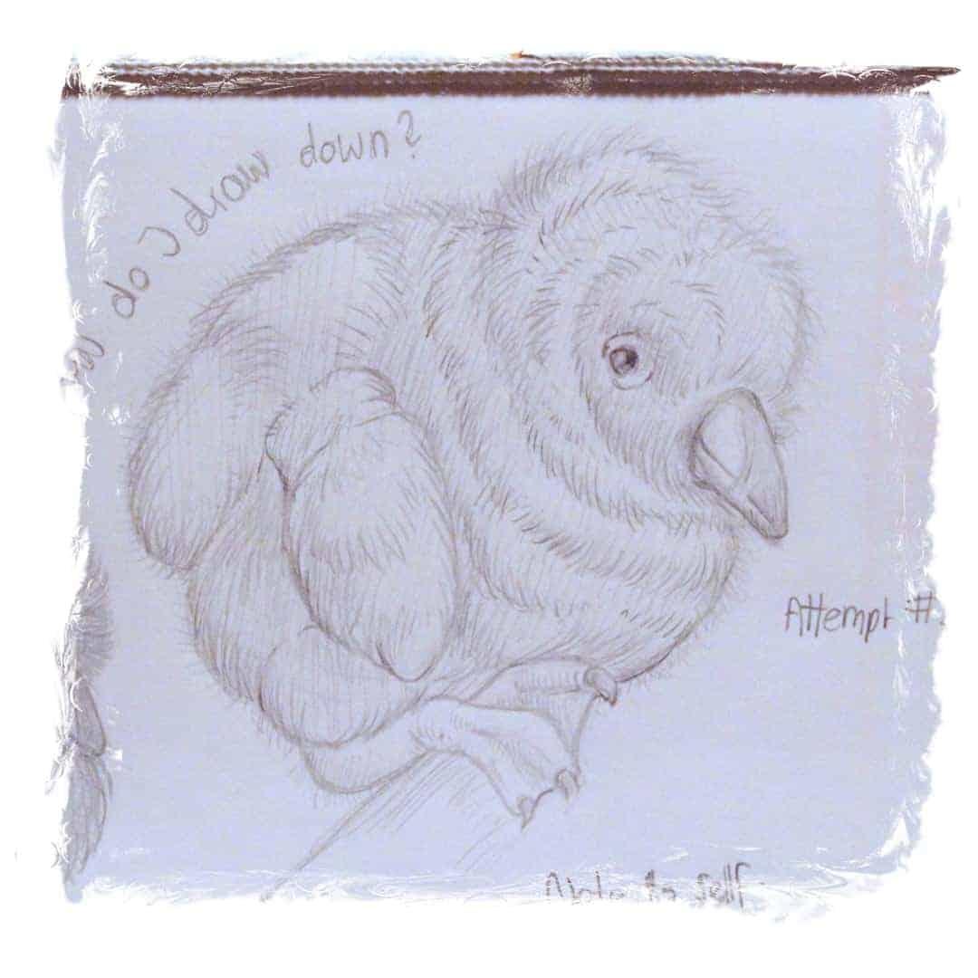 Papageitaucher-Küken