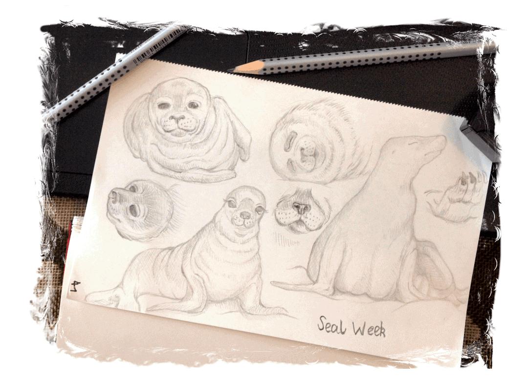 Robben zeichnen