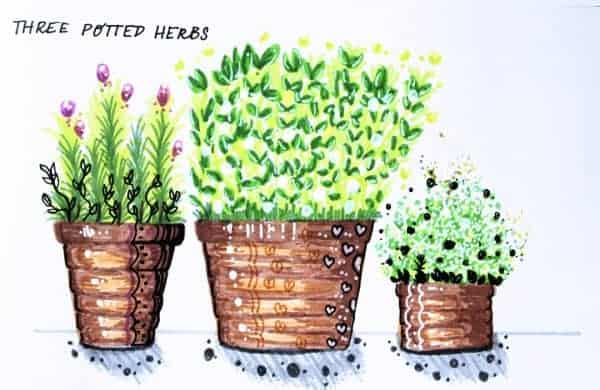 Three potted herbs